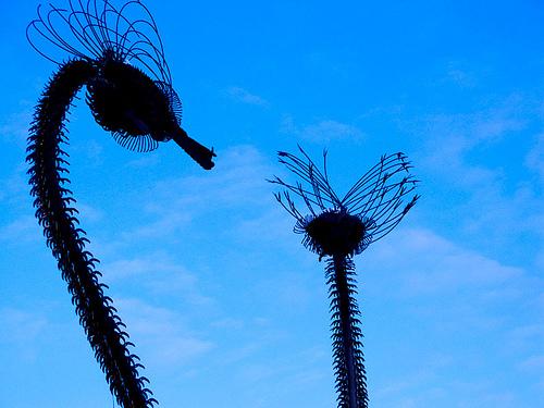 warren_birds